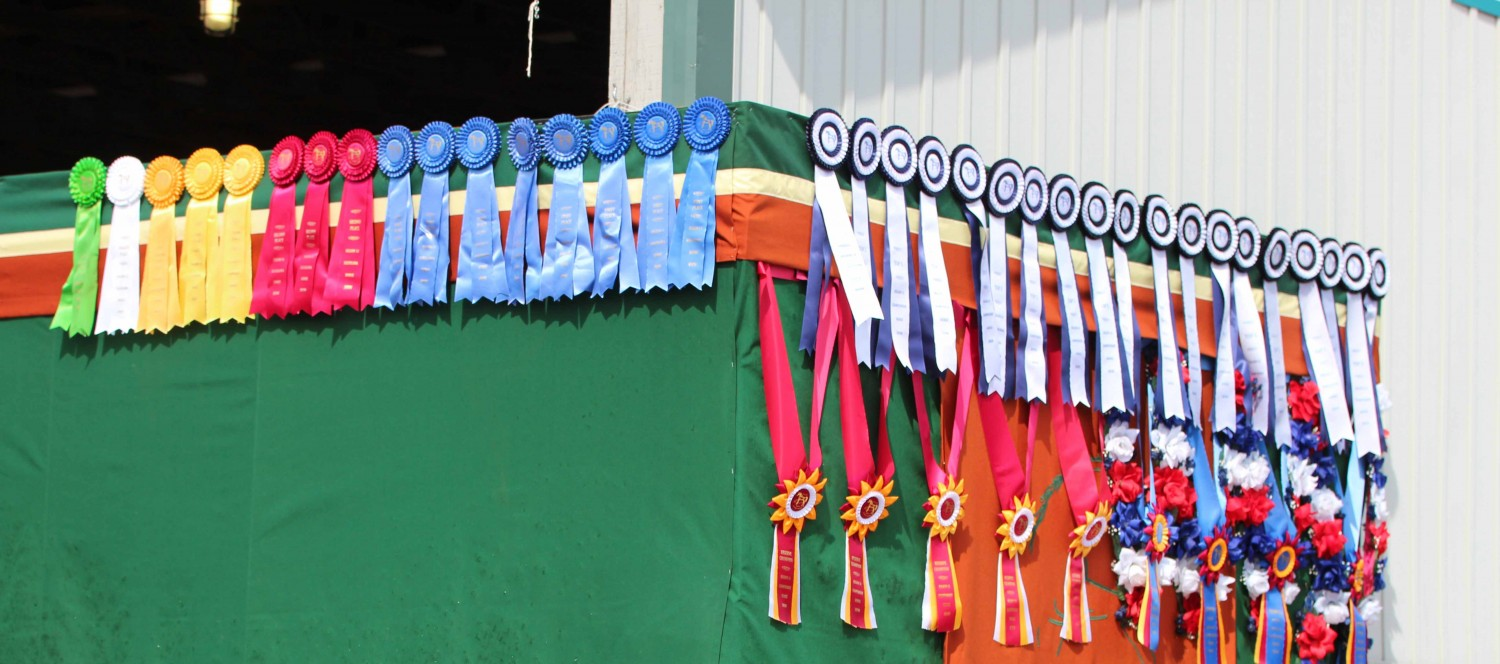 Bella Vista Equestrian Center